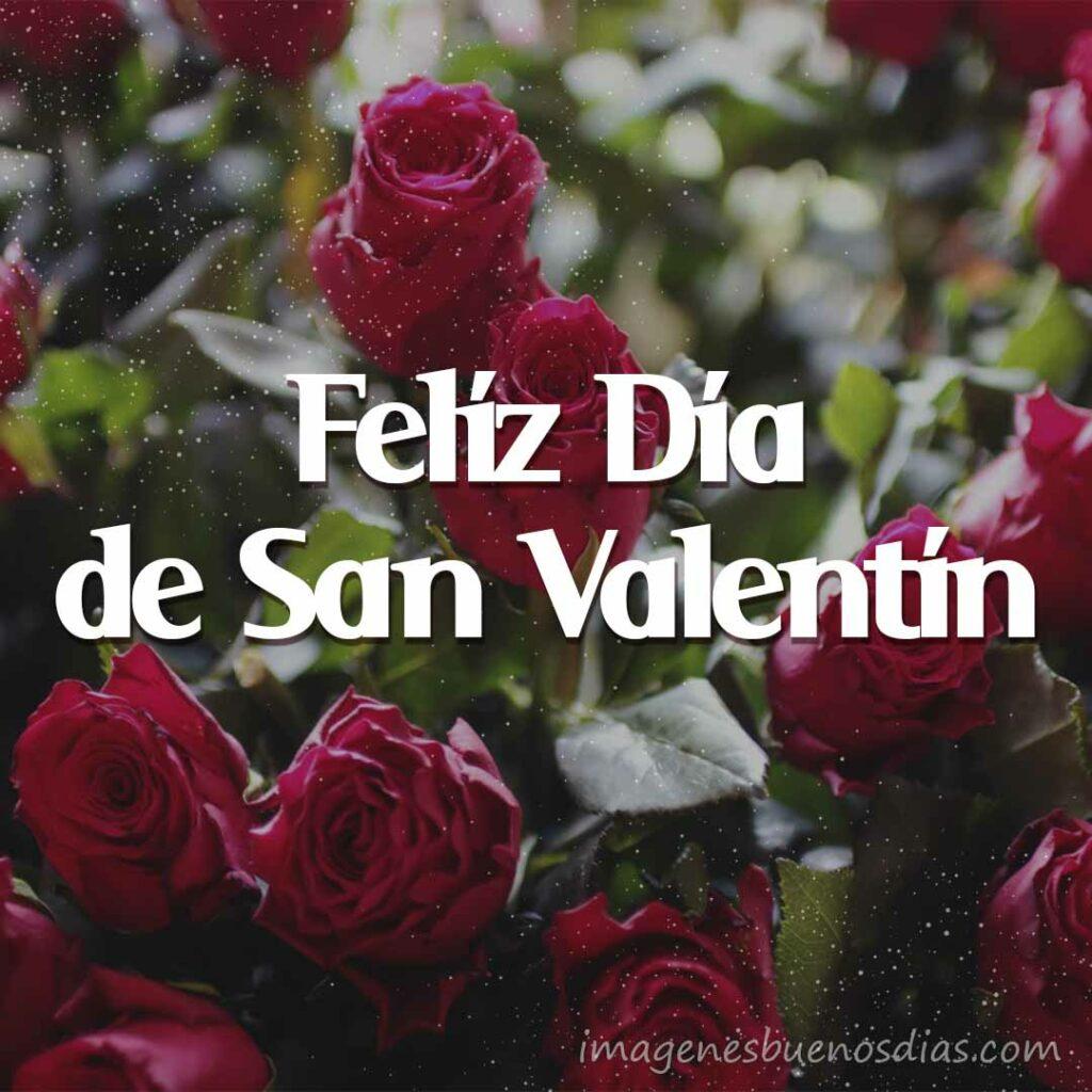 Imágenes con Frases San Valentín