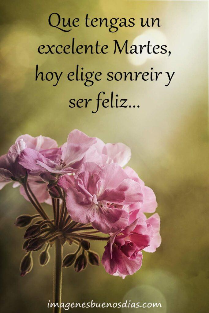 Que tengas un excelente martes, hoy elige sonreír y ser feliz...